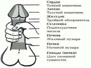 массаж для увеличения члена