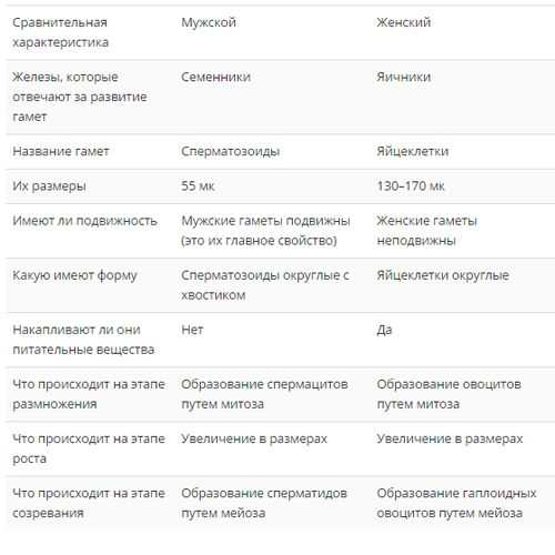 овогенез и сперматогенез таблица