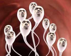 сколько живут сперматозоиды во влагалище