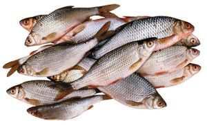 сперма пахнет рыбой