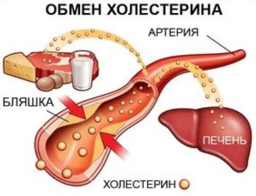 Норма холестерина в крови у мужчин — таблица, что делать при повышении или понижении холестерина